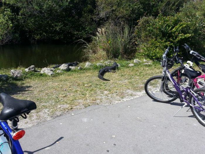 sv bike