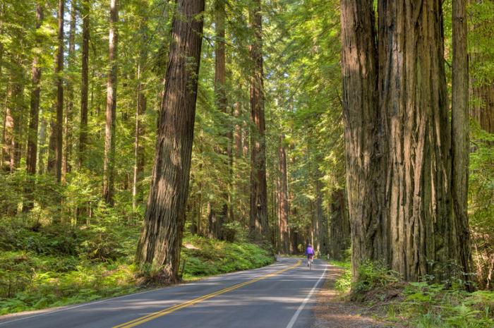 Redwood Highway in Californië. © thinkstock