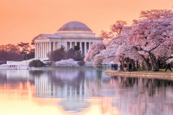 Cherry Blossom Festival - Washington D.C.